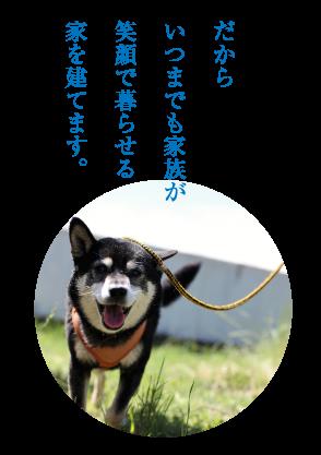 dog_message